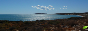 Photos d'Australie: Shark bay