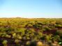 Photos d'Australie: Désert et plantes désertiques