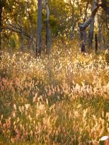 Photos d'Australie: Rayons de soleil dans les herbes hautes