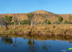 Photos d'Australie: Reflets rivière baobab