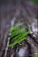 végétation grimpante