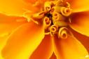 image30566
