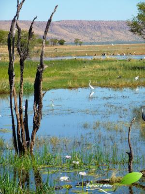 Parrys lagoons et ses oiseaux