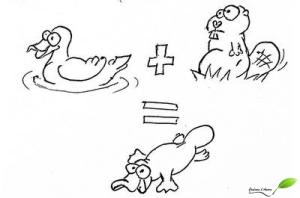 Canard + castor = ornithorynque