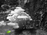 image3314