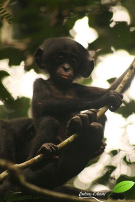 monkey fest (13)