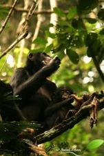 monkey fest (46)