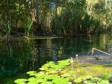 Source chaude à Mataranka