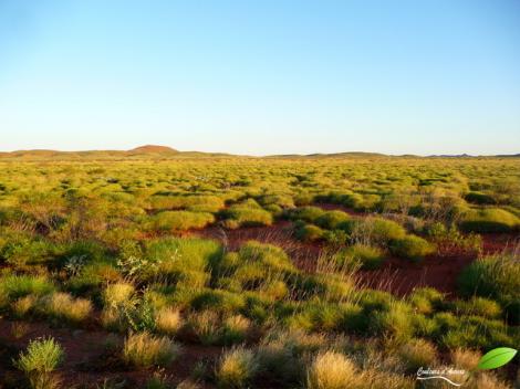 Le vert du désert