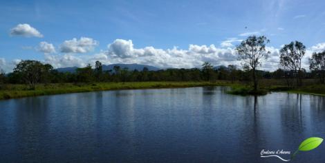 Tyto wetland