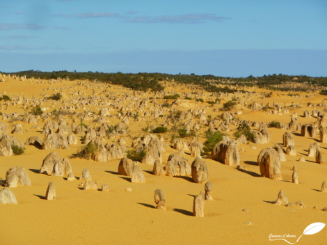 Pinacles du parc national Nambung