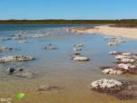 Stromatolithes du lac Thetis