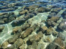 Stromatolithes d'Hamelin pool