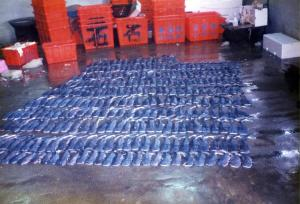 304 bébés requins baleine retrouvés dans le ventre d'une femelle - Photo © Shoou-Jeng Joung