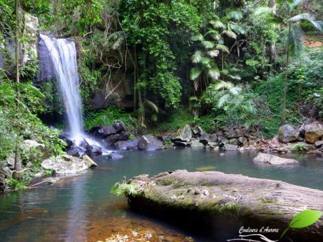 Parc national Tamborine: Joalah section