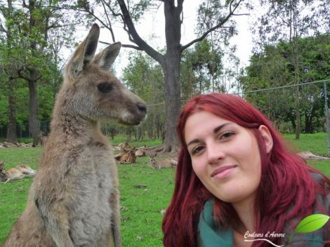Aurore et un Kangourou à Lone Pine Sanctuary