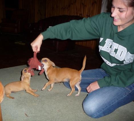 Maman et bébé chien: Bibie la maman, Bailey le bébé