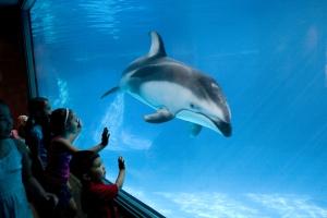 Dauphin en aquarium = prison