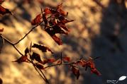 image3653
