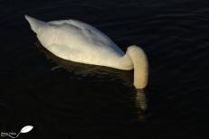 image3883