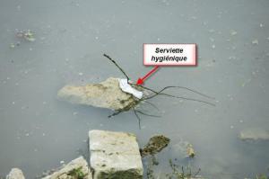 serviette hygiénique dans une rivière