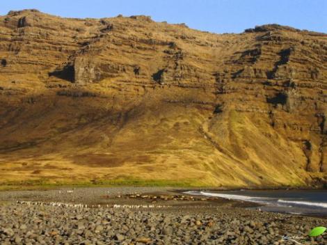 Baie de la Hébé (île de la possession, Crozet, TAAF)