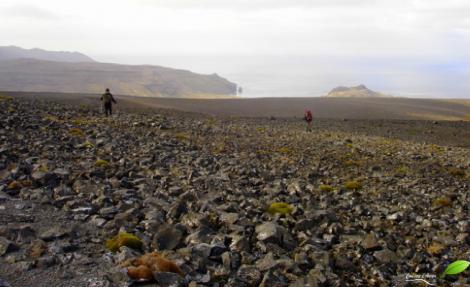 Paysage austère de l'île de la possession (archipel de Crozet, TAAF)