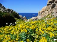 Capo Testa (Sardaigne, Italie) au printemps
