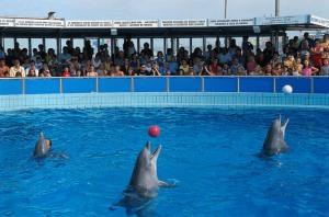 Numéro de dauphins en prison