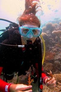 Récolte de morceaux de corail cassés