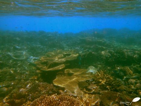 Récif de corail à faible profondeur
