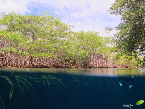 Casa cenote entre l'eau et l'air