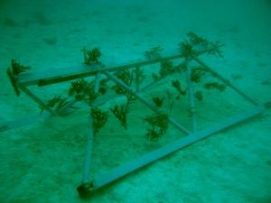 Récif artificiel et Dispositif de Concentration de Poissons orné de corail
