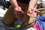Couleuvre tessellée trouvée avec un poisson