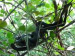Plusieurs couleuvres dans un buisson