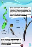 Sentier sous-marin sur herbier de posidonie: 3ème pancarte