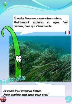 Sentier sous-marin sur herbier de posidonie: 9ème pancarte