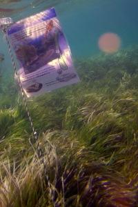 pancarte Sido tour sur herbier