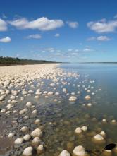 Lac Clifton et ses stromatolithes