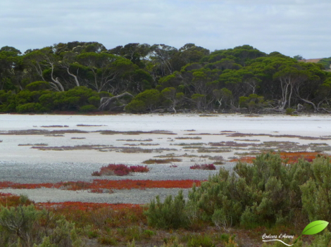 Parc national Coorong
