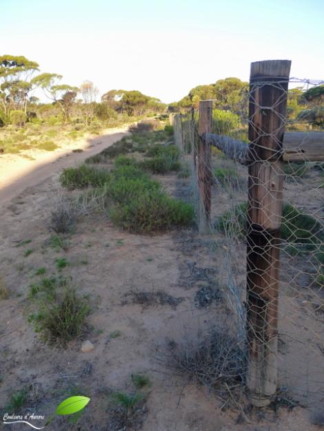 La barrière protégeant les états du sud des dingos. Elle parcours de milliers de km entre la plaine du Nullarbor et du Queensland. Il fallait que je la vois car en cours d'écologie on nous en a pas mal parlé...