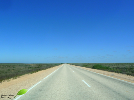 Début de la route de la plaine du Nullarbor