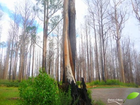 Vers Marysville des incendies ont eu lieu quelques années auparavant, des traces sont toujours là