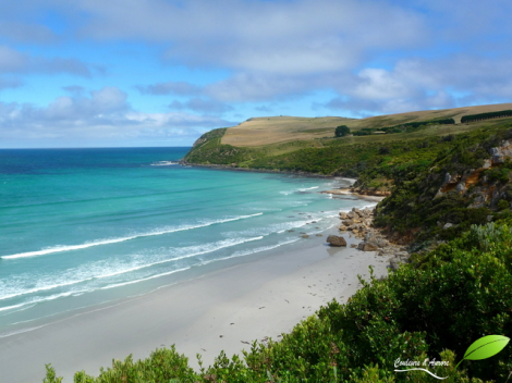 Cape bridgewater