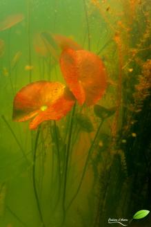 A l'intérieur d'une mare du Pinail