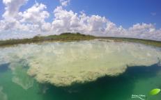 Stromatolithe du lac de Bacalar