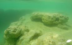 Stromatolithe sous l'eau