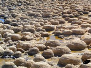 Stromatolithes du lac clifton