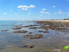 Hamelin Pool, à Shark bay