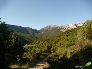 Sentier menant au canyon